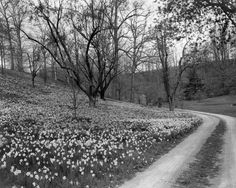 March 1937.  Pleasant Valley Gardens.  Yorklyn Road.  9200-W14-002 #009.  Delaware Public Archives.  www.archives.delaware.gov