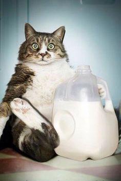 what milk?