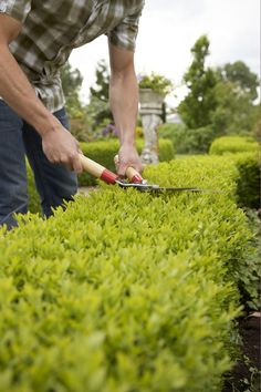 maintenance pruning - topiary