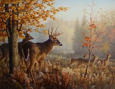 Whitetail deer painting by Greg Alexander. Hirsch Wallpaper, Deer Wallpaper, Painting Wallpaper, Photo Wallpaper, Painting Art, Room Wallpaper, David Painting, Luxury Wallpaper, Widescreen Wallpaper