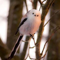 The beautiful one jukkarisikko All Gods Creatures, Cute Creatures, Pretty Animals, Cute Animals, Photo Comic, Cute Birds, Wild Birds, Beautiful Birds, Beautiful People