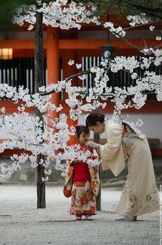 Kimono and sakura