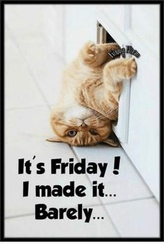 Find very good Jokes, Memes and Quotes on our site. Keep calm and have fun. Funny Pictures, Videos, Jokes & new flash games every day. Friday Quotes Humor, Cat Quotes, Friday Sayings, Funny Friday Memes, Monday Quotes, Daily Quotes, Funny Videos, Humor Videos, Friday Cat