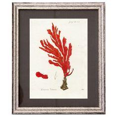 Cuadro clásico Coral Belice 5 Cómpralo en www.betty-co.com