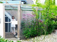 Precis intill fikabersån ligger hönshuset där familjen hämtar ägg dagligen från de fem dvärgkochinhönsen.