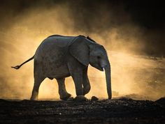 Dusty Affair Photo by Jaco Marx — National Geographic Your Shot