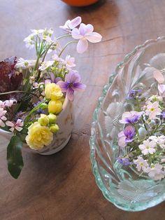 Mari's studio スタジオの小さな庭の花たち Mari Mochizuki  望月麻里