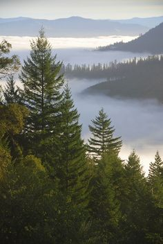 View from King Range over Humboldt State Redwoods, Humboldt County, California   Flickr - Photo Sharing!
