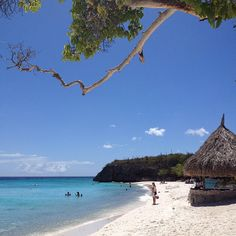 #CasAbao Beach, #Curacao  With its clear turquoise water, waving palm trees and white sandy beach, Cas Abao is a true paradise. Located at the northwest coast of Curaçao, Cas Abao Beach has been declared one of the most pristine beaches of Curaçao, ideal for families and water sports.  Enjoy beautiful Curacao, stay at #TheRoyalSeaAquarium!  http://www.royalseaquariumresort.com/