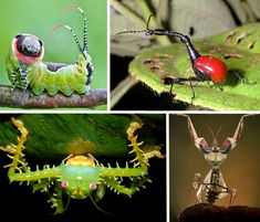 7 Incredible Insect Wonders of the World