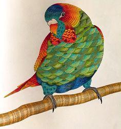 Milliemarottabooks Colorindolivrostop Reinoanimal Paraisotropical Adgcoresmagicas Fabercastell Romanticcountrycoloringbook Boracolorirtop