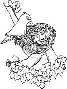 Printable Pictures Of Birds Free Printable Coloring Page - coloring pages birds nest
