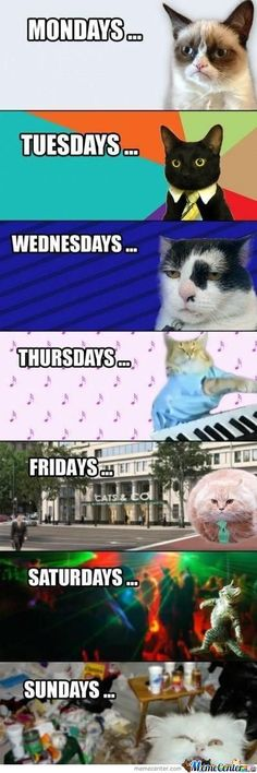 Trendy funny memes humor so true grumpy cat ideas Memes Humor, Funny Animal Memes, Cute Funny Animals, Funny Animal Pictures, Funny Cats, Funny Memes, Funny Quotes, Meme Meme, Silly Cats