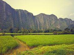 Ricefields and limestone mountains in Konglor, Laos