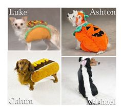 """""""Your Dog's Halloween Costume!"""" by x5sosxpreferencesx ❤ liked on Polyvore featuring art"""