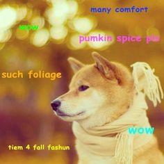 Fall doge.