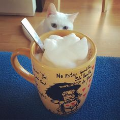 #nieve #ilovemycat #cat #catlover #catwhite #bolitablanca #instacat #instagata #gata #gatete #gatita #happy #hope #hogar #love #relax #heterocromía #heterocromiacat #mug #tazaspersonalizadas #mafalda #cappuccino #cafe #coffee #instacoffee by rachel_nodal
