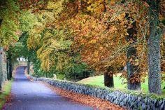 Efterår ved Krengerup Gods #visitfyn #fyn #visitdenmark #skov #forrest #naturelovers #natur #denmark #danmark #dänemark #landscape #nofilter #sky #assens #mitassens #fynerfin #vielskernaturen #visitassens #instanature #picoftheday #leaves autumn #efterår #fall #leafs