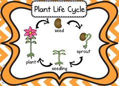 Totally perfect way to review plant life cycle $