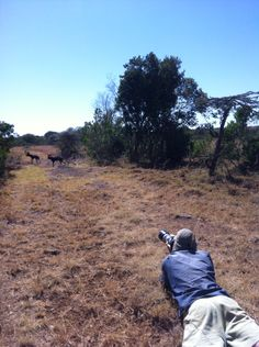Photographing wild dog at Ekorians Mugie Camp. It's thrilling!