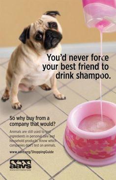 STOP ANIMAL TESTING !!