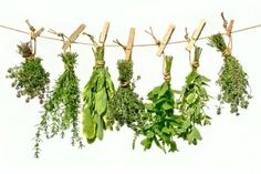 Natural herbs for stress and anxiety Fresco, Natural Haircut Styles, Pork Fajitas, Paleo On A Budget, Stupid Easy Paleo, Cool Hairstyles For Girls, Whole Food Recipes, Healthy Recipes, Turmeric Health Benefits