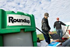 Report: Monsanto ghostwrote scientific reports that regulators used to determine that its Roundup weed killer does not cause cancer.