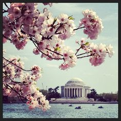 They sing about April in Paris, but April in DC isn't bad either ...