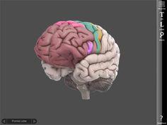 Brain ipad app