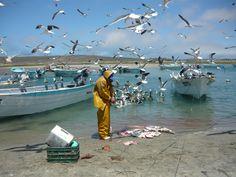eSustentable: Falta información para evaluar la sustentabilidad de la pesca de tiburones