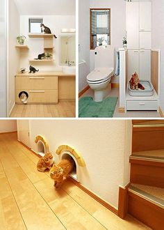 awesome kitty furniture