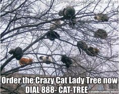 Funny pictures about Cat lady tree. Oh, and cool pics about Cat lady tree. Also, Cat lady tree. Crazy Cat Lady, Crazy Cats, I Love Cats, Cute Cats, Funny Kitties, Adorable Kittens, Humor Animal, Funny Animals, Cute Animals