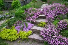 Landscaping Without Plants Backyard Hill Landscaping, Landscaping Around House, Luxury Landscaping, Landscaping Jobs, Landscaping Software, Perennial Ground Cover, Landscape Stairs, Plant Covers, Gravel Garden