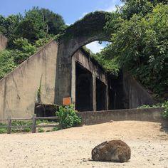 うさぎと廃墟 #Rabbit and #Ruins