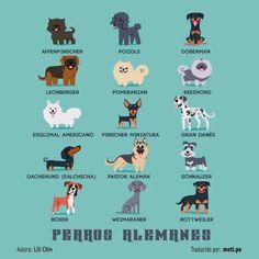 Perros Alemanes.