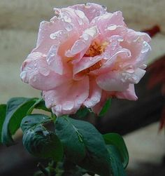 45 Mejores Imágenes De Flores Chidas Beautiful Flowers Cherry