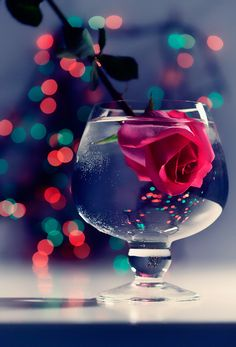 romatic rose by *LadyMartist :: submersed, something about those colors...