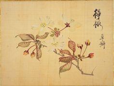 坂本浩然「桜花譜」