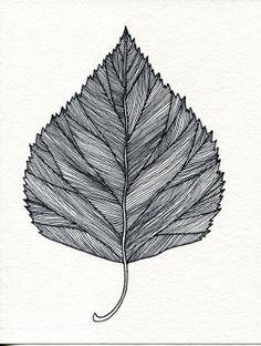 Pretty Leaf Sketch