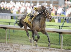 Super Saver is the winner of the 2010 Kentucky Derby. Preakness Stakes, Derby Winners, Sport Of Kings, Thoroughbred Horse, Super Saver, Horse Riding, Kentucky Derby, Beautiful Horses, Equestrian
