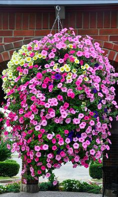 hanging baskets My nanny and Grandaddy always had purple and white petunias that were so hardy they spread like weeds! Hanging Plants Outdoor, Plants For Hanging Baskets, Hanging Flowers, Diy Hanging, Container Flowers, Flower Planters, Container Plants, Container Gardening, Flower Pots