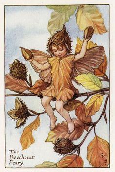Beechnut Flower Fairy Vintage Print c1927 Cicely by TheOldMapShop