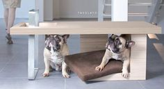 Tavolato Coffee Table, with accompanying pet seat, by dog- and cat-friendly furniture manufacturers Petsmood is an elegant minimalist piece that combines sleek style with refreshing utility.  http://vurni.com/tavolato-coffee-table-and-pet-seat/