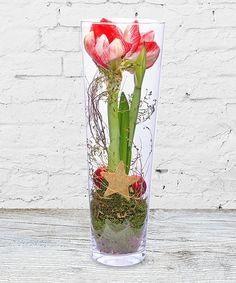 Amaryllis im Glas - jetzt bestellen bei Valentins | Valentins Blumenversand - Blumen und Geschenke versenden