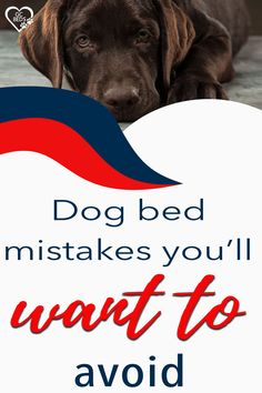 Learn what all goes into a good dog bed in order to combine comfort and value (and avoid probmls with smells or even sickness) and enter the context to win one for free Cute Dog Beds, Cute Dogs, Largest Great Dane, Personalized Dog Beds, Indestructable Dog Bed, Chihuahua, Your Pet, Sick, Good Things