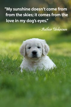 60 Best Pet Quotes Images I Love Dogs Doggies Pets