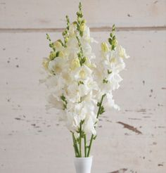 David's Garden Seeds Flower Snapdragon Chantilly White (White) 50 Non-GMO, Hybrid Seeds Edible Flowers, All Flowers, Wedding Flowers, Summer Flowers, White Flowers, Cut Flower Garden, Flower Farm, Snapdragon Flowers, Winter Greenhouse