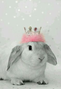 prom queen daily bunny