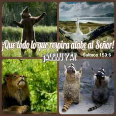 ¡Que todo lo que respira alabe al #Señor ! ¡Aleluya! #Salmos 150:6