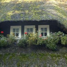 Thatched roof -